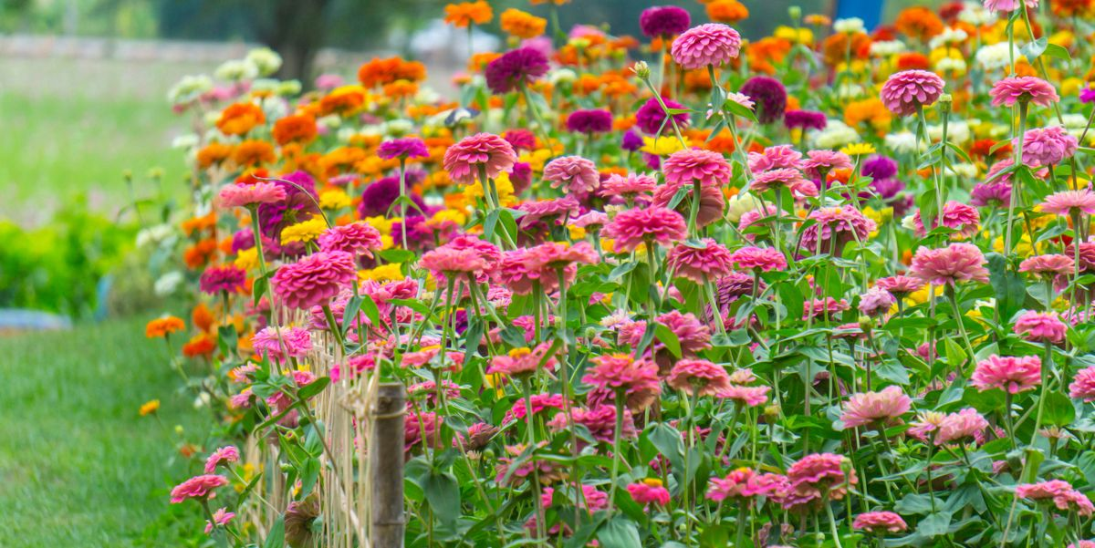 11 Rewarding Plants to Grow in June for a Colorful Summer Garden