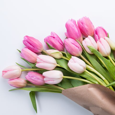 Close-Up Of Fresh Pink Tulips Against White Background