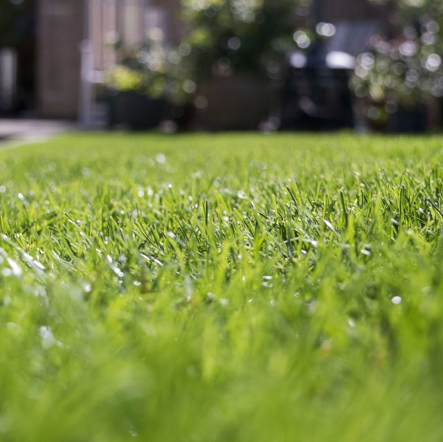 close up of grass on field
