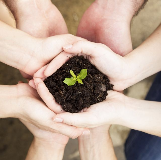 close up of hands of friends holding a young plant