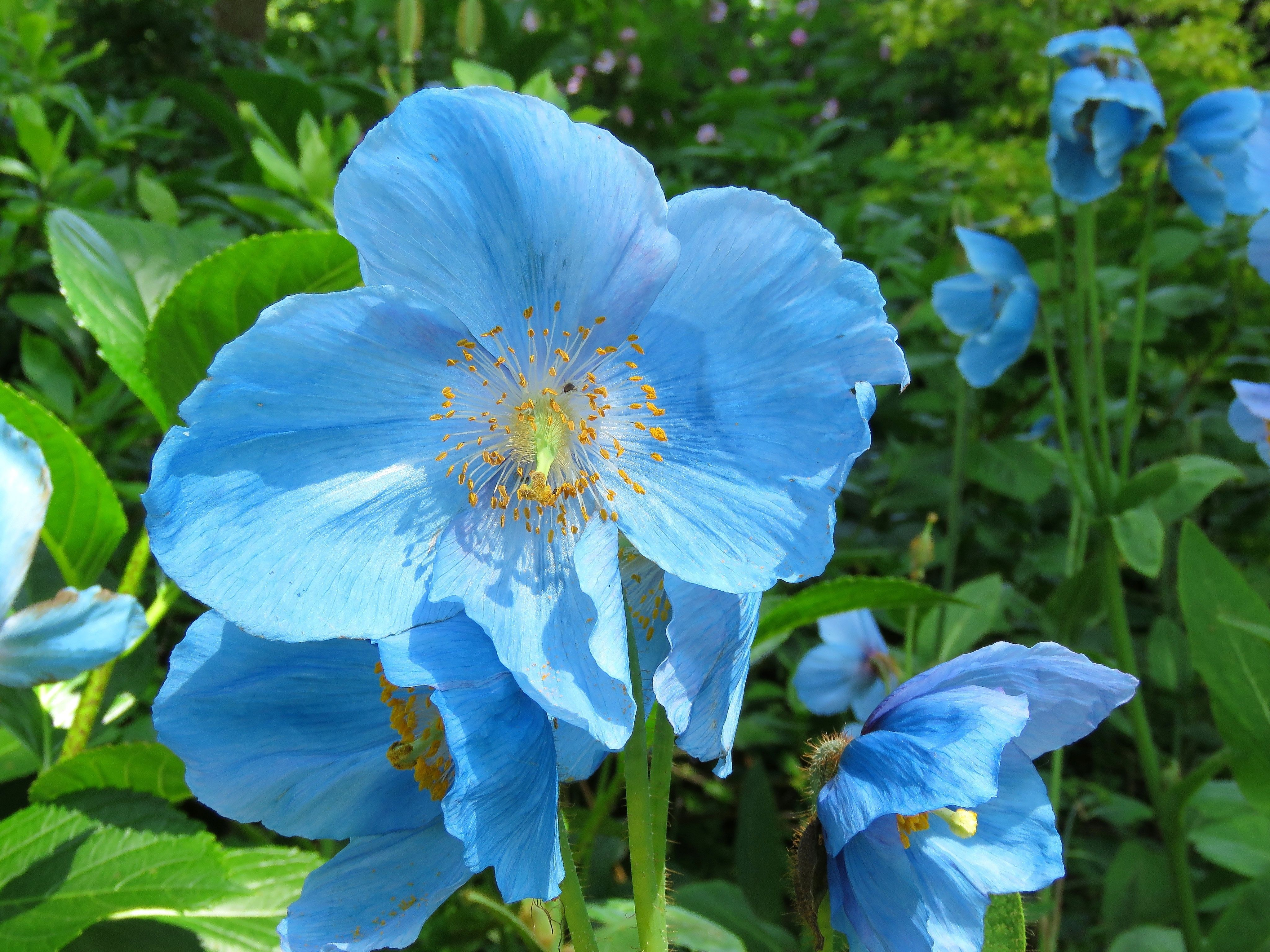20 Blue Flowers For Gardens Perennials Annuals With Blue Blossoms