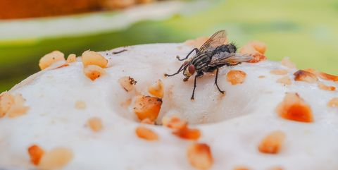 Close-Up Of Insect On Food