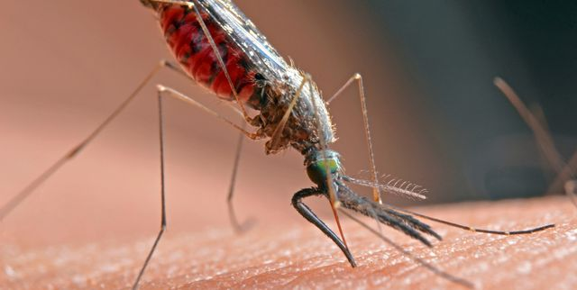 How To Get Rid Of And Kill Mosquitoes, Killing Mosquitoes Outdoors