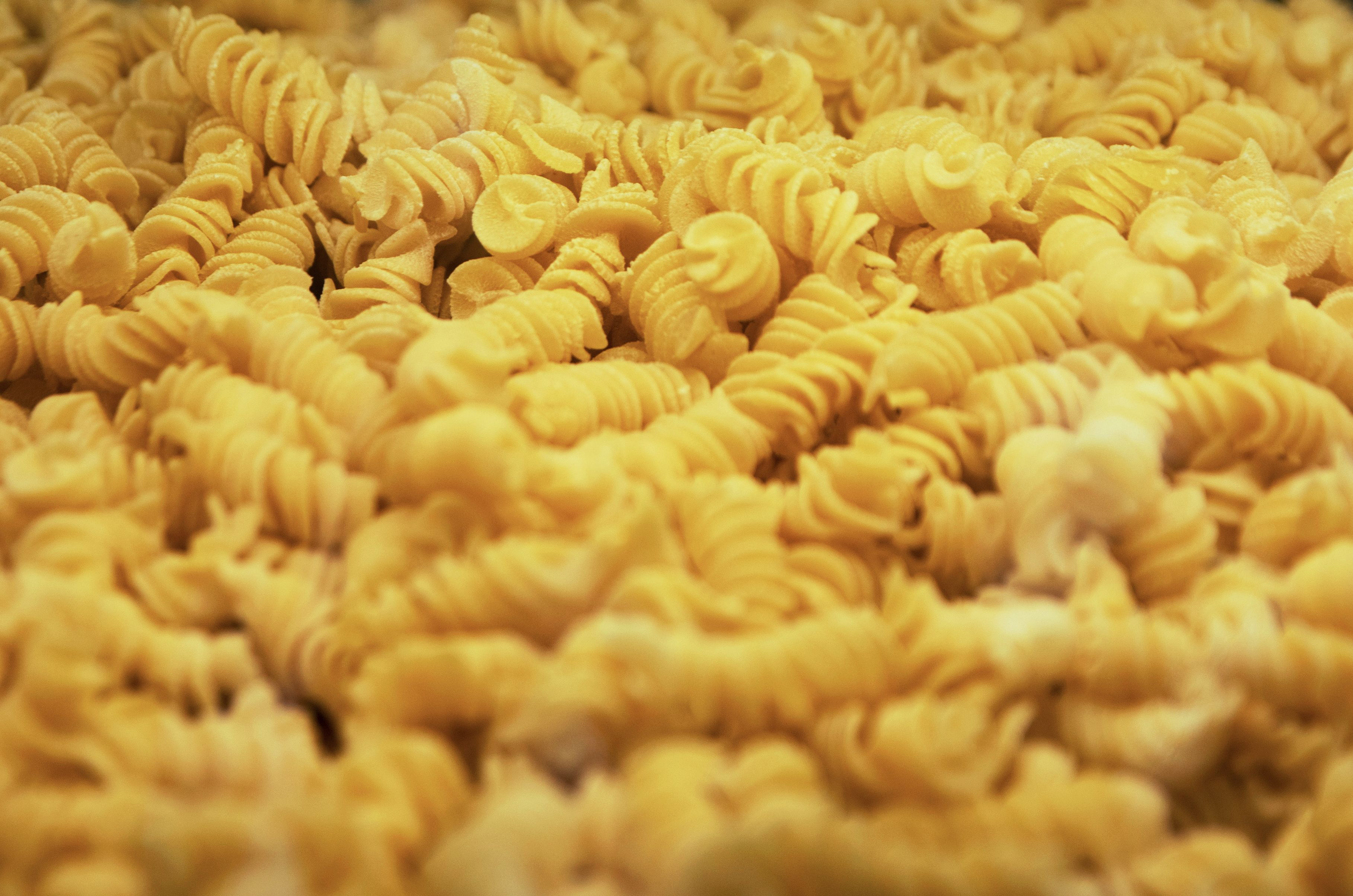 Close-up of Italian Fusilli