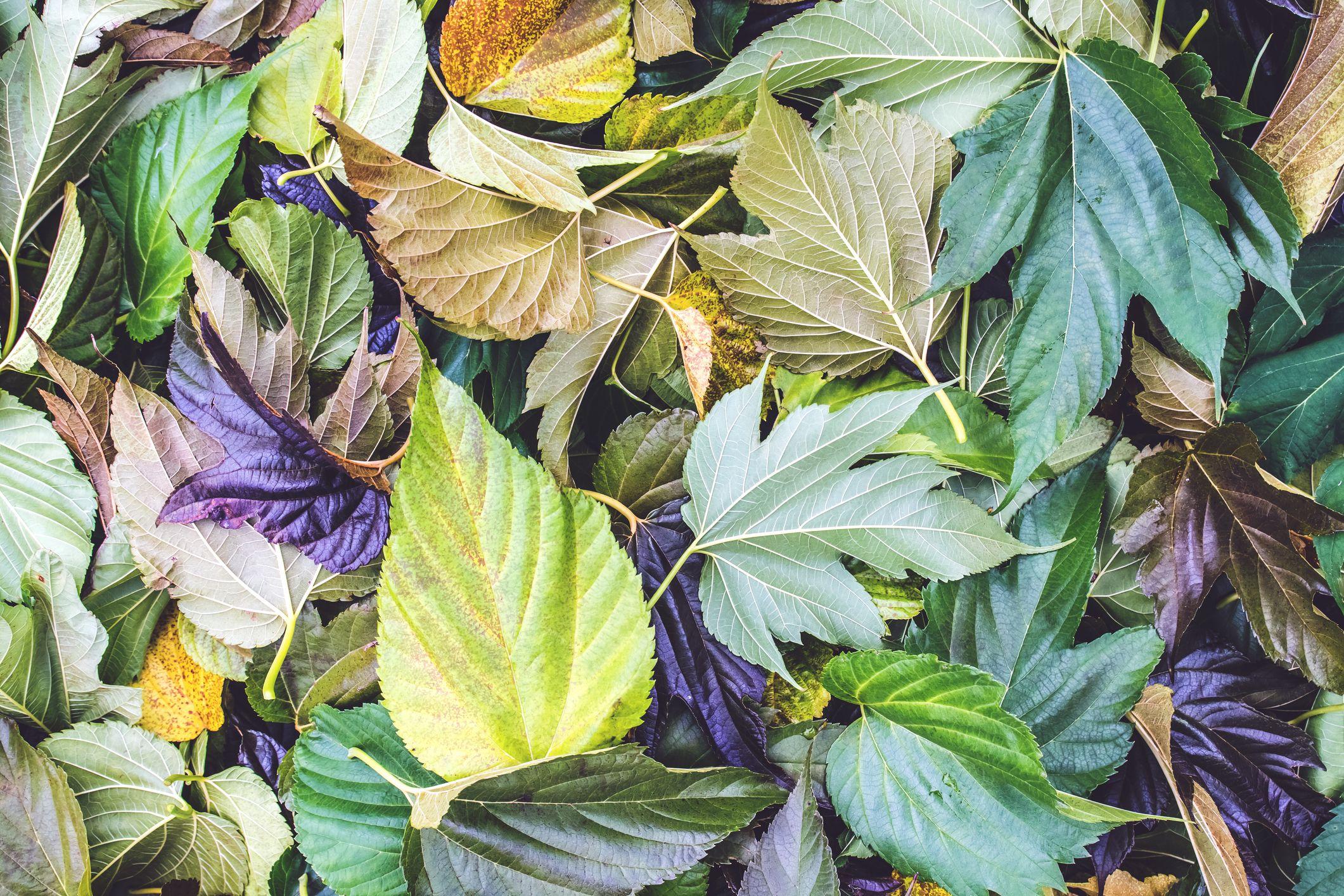 5 ways to put fallen leaves to work in your garden