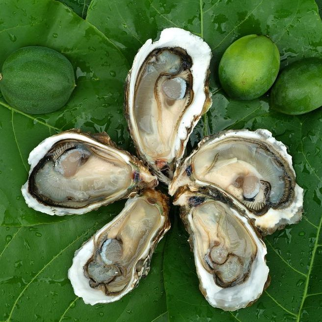 Close-Up Of Oysters On Leaves