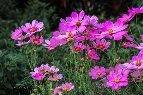 close up of pink flowering plants on field