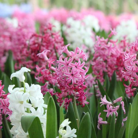 11 Best Flowers To Plant For Spring When To Plant Daffodils