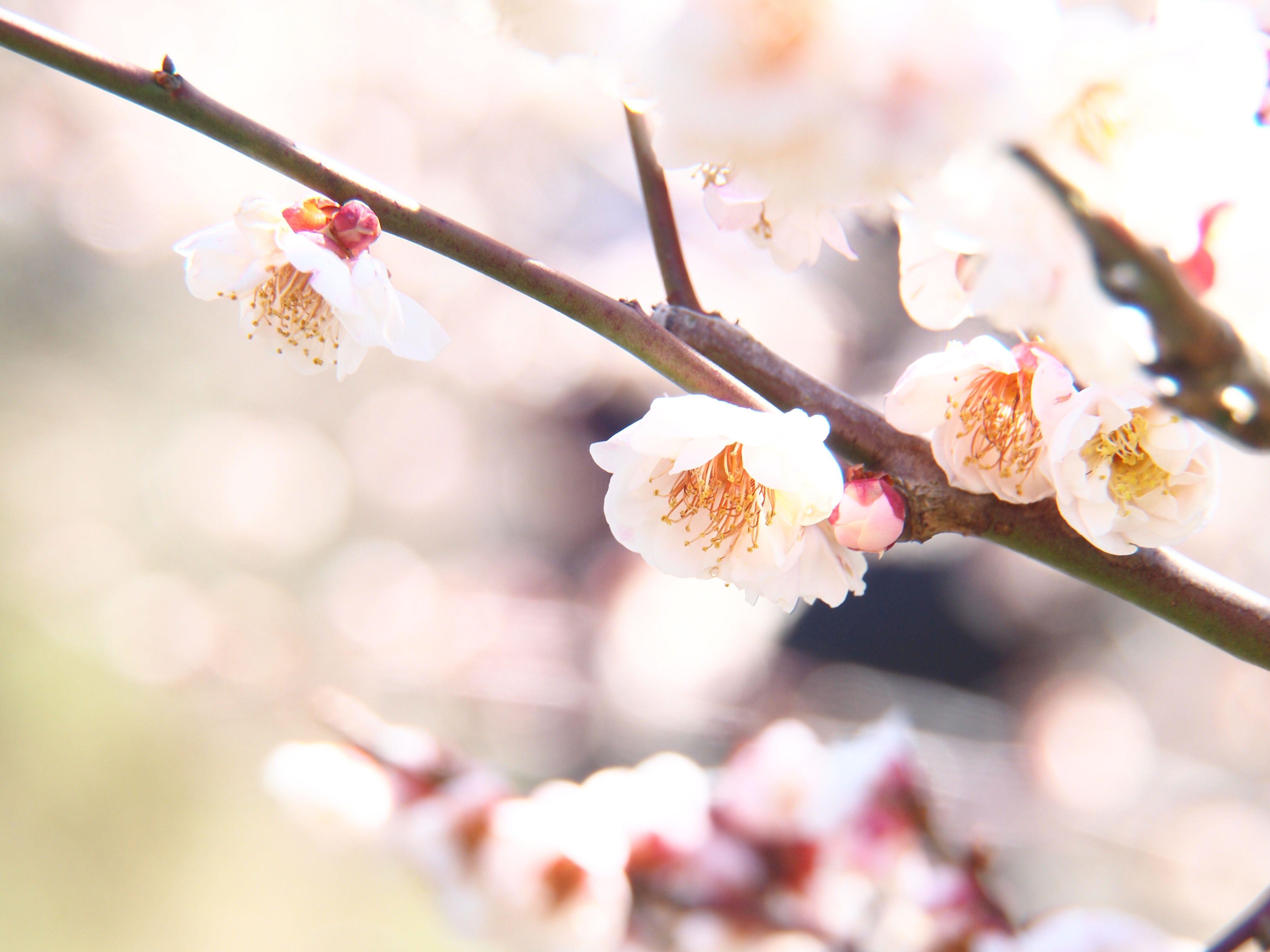 和の暦365日 弥生20日 ──[春分]しゅんぶん&[雀始巣]すずめはじめてすくう