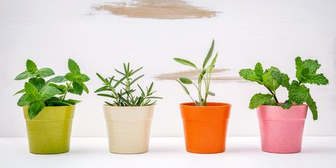 Close Up Of Potted Plant Against White Background