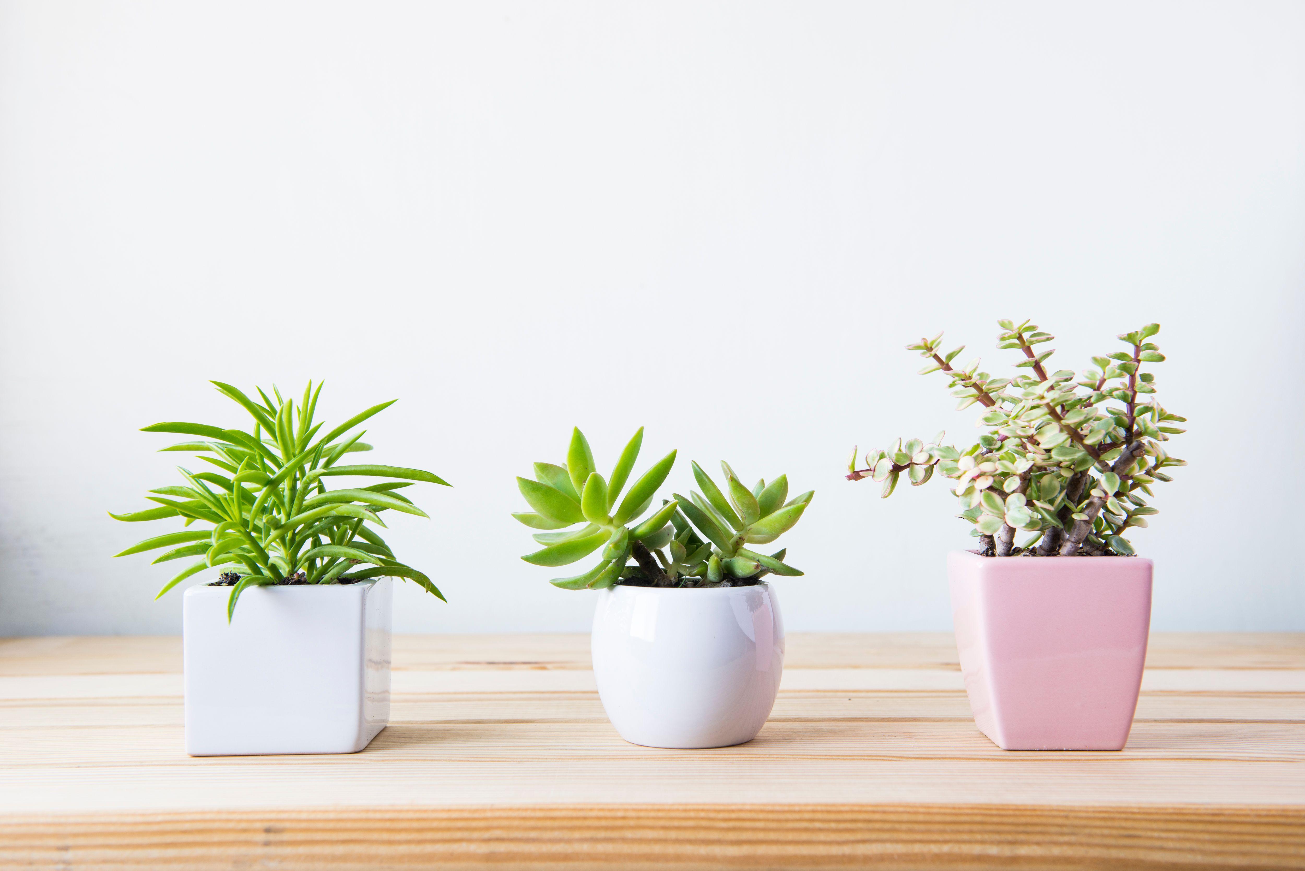 Piante Strane Da Appartamento piante grasse succulente 2019: quelle da avere in casa