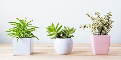 Piante Grasse Da Appartamento Nomi.Piante Grasse Succulente 2019 Quelle Da Avere In Casa