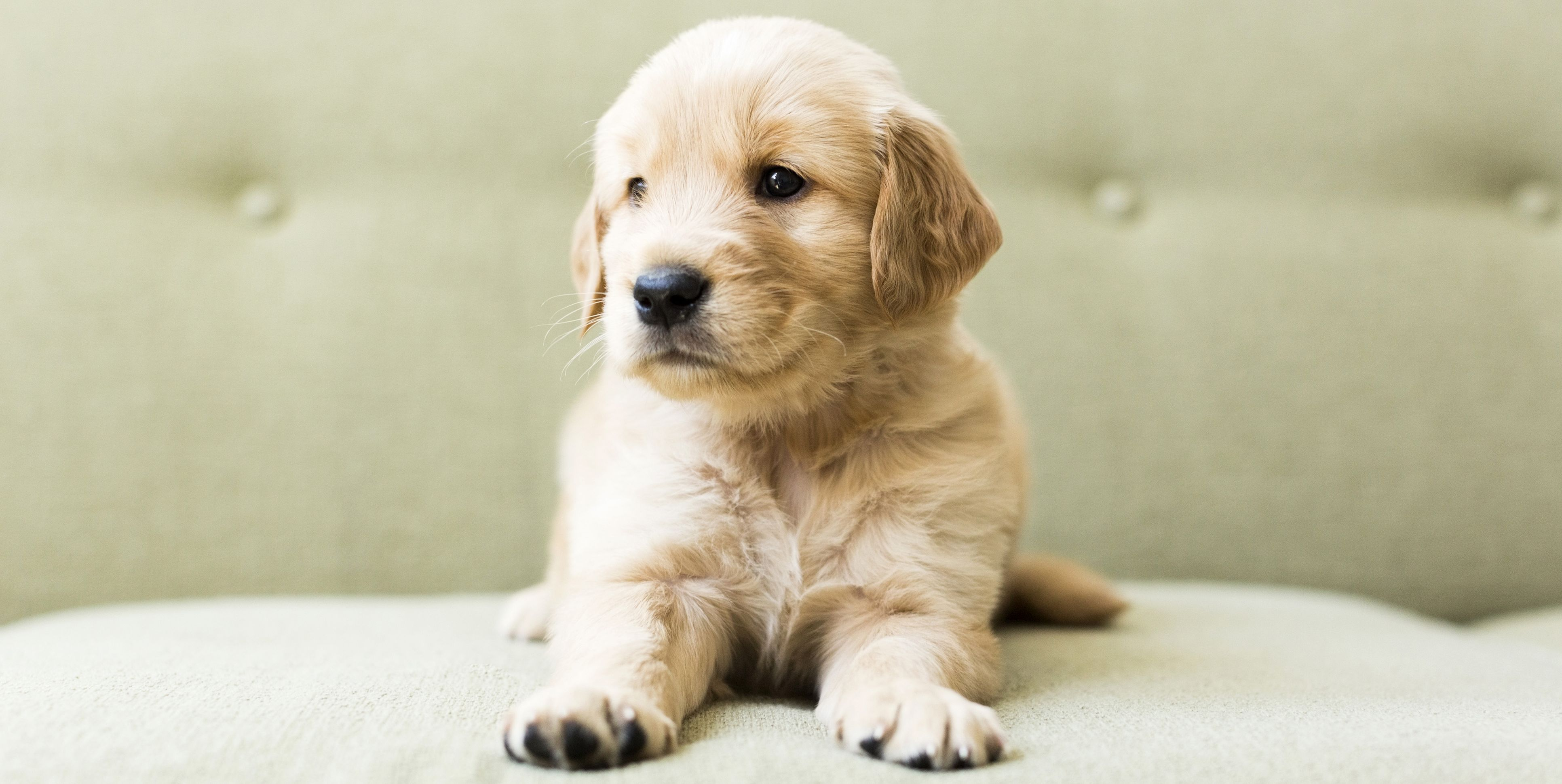 puppy-sofa