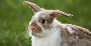 Close-Up Of Rabbit Sitting On Grassy Field