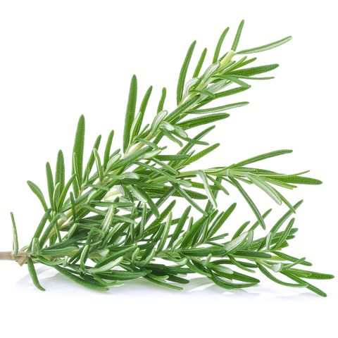 Close-Up Of Rosemary Against White Background