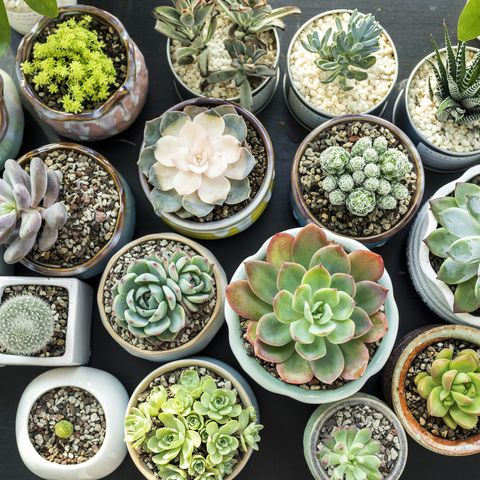Close-Up Of succulent plants