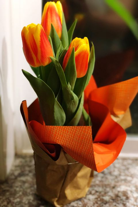 Close-Up Of Tulips In Container On Table At Home
