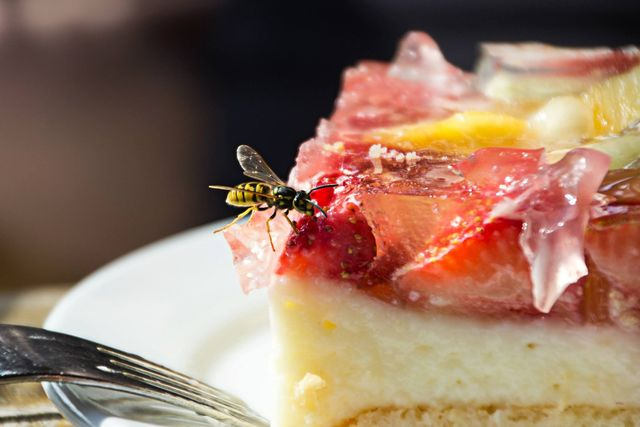 close up of wasp on food served on plate