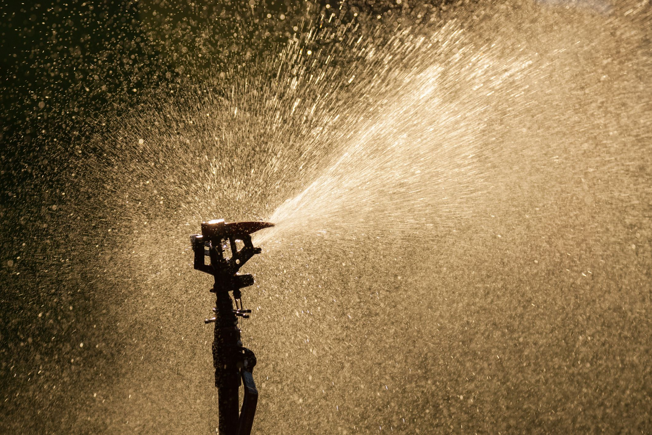 Close-Up Of Water Spraying From Sprinkler
