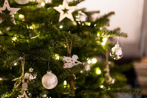 Living Christmas Tree.When To Take Christmas Tree Down Date Revealed By Twelfth