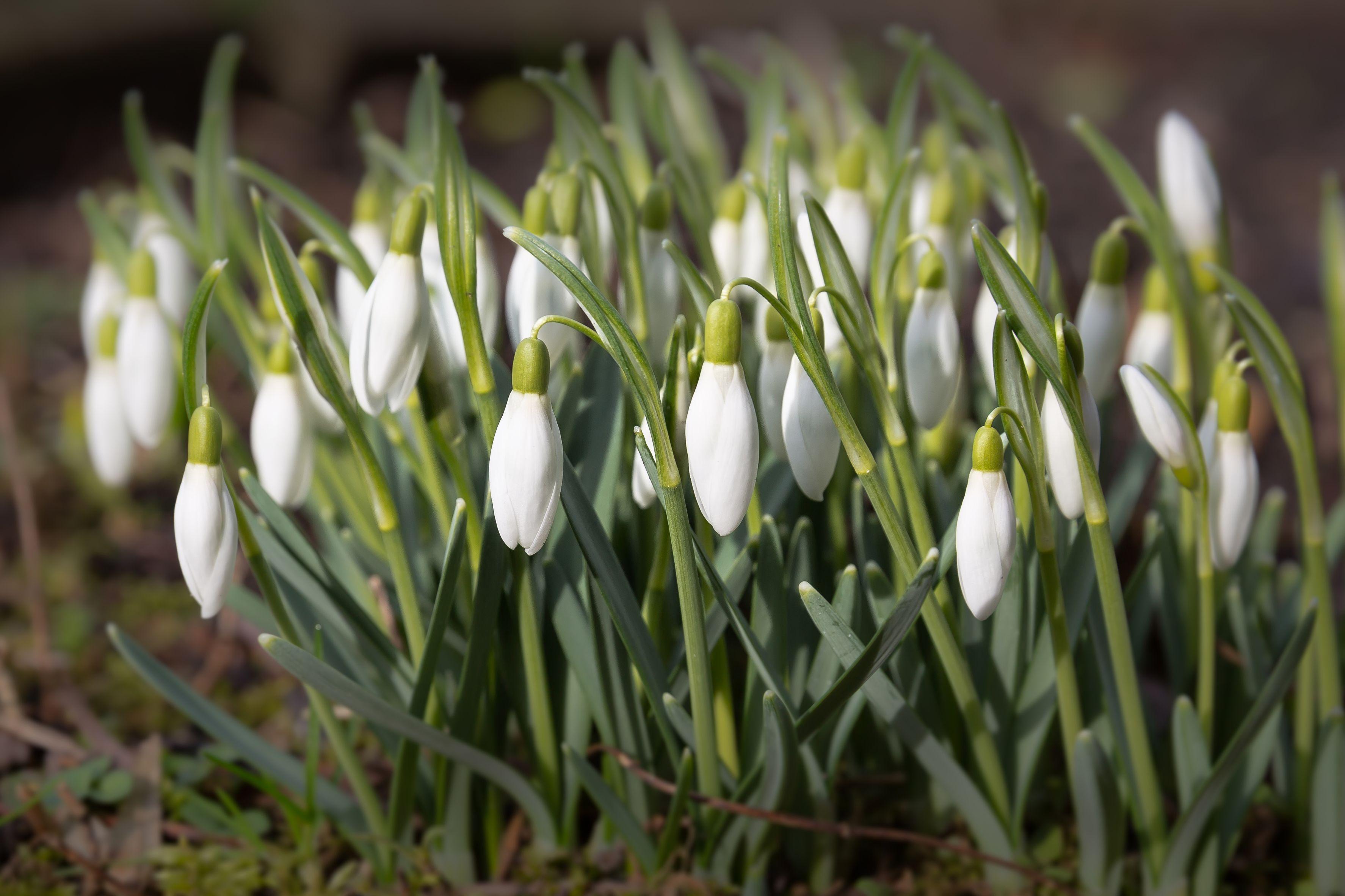 15 Best Plants That Bloom in Winter - Flowers That Develop