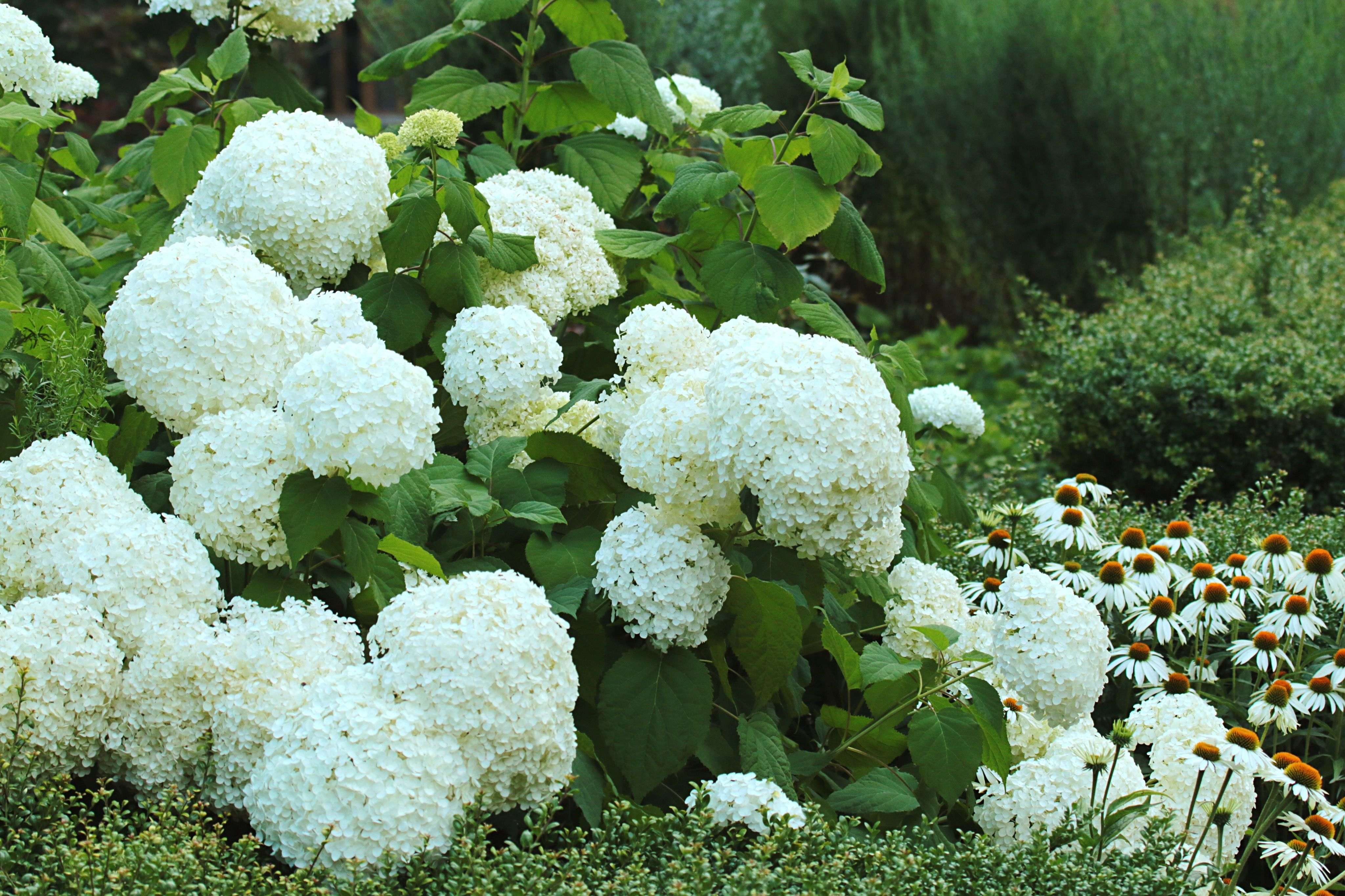 20 White Flowers to Brighten up Your Backyard