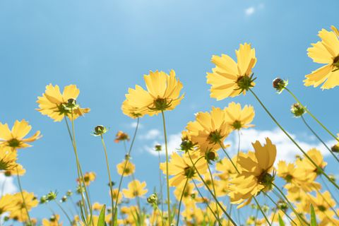 close up of wild flowers against sunlight and blue sky