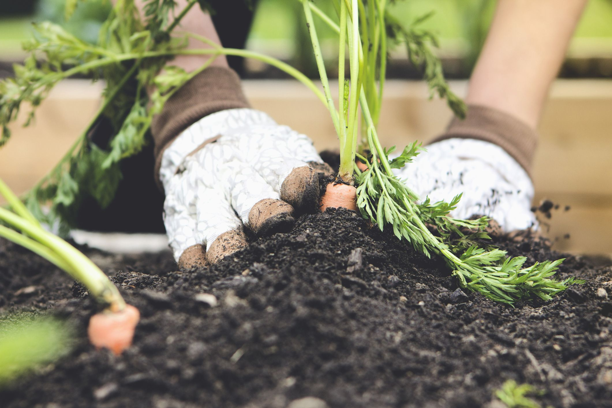 Gardening For Beginners: 10 Easy Garden Tasks To Get Started