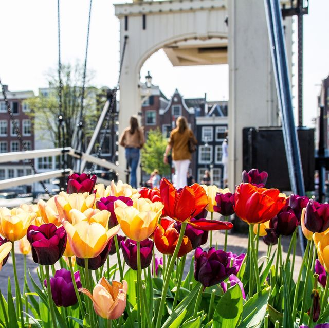 Amsterdam cruise, Amsterdam mini cruise