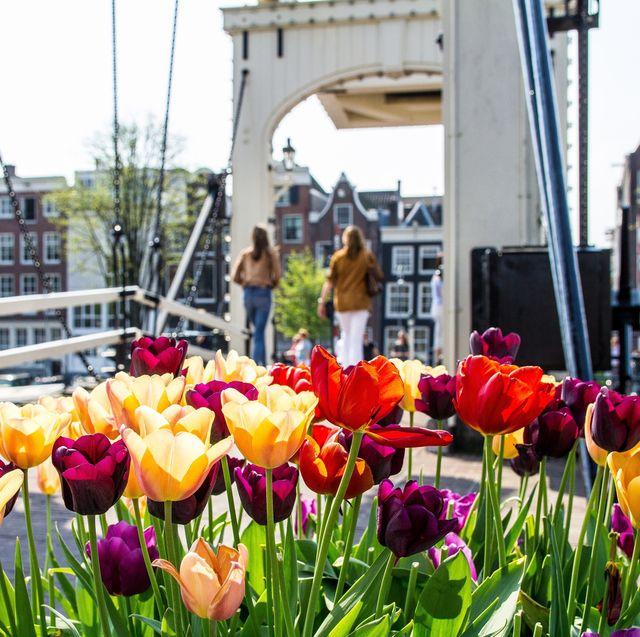 Amsterdam mini cruise