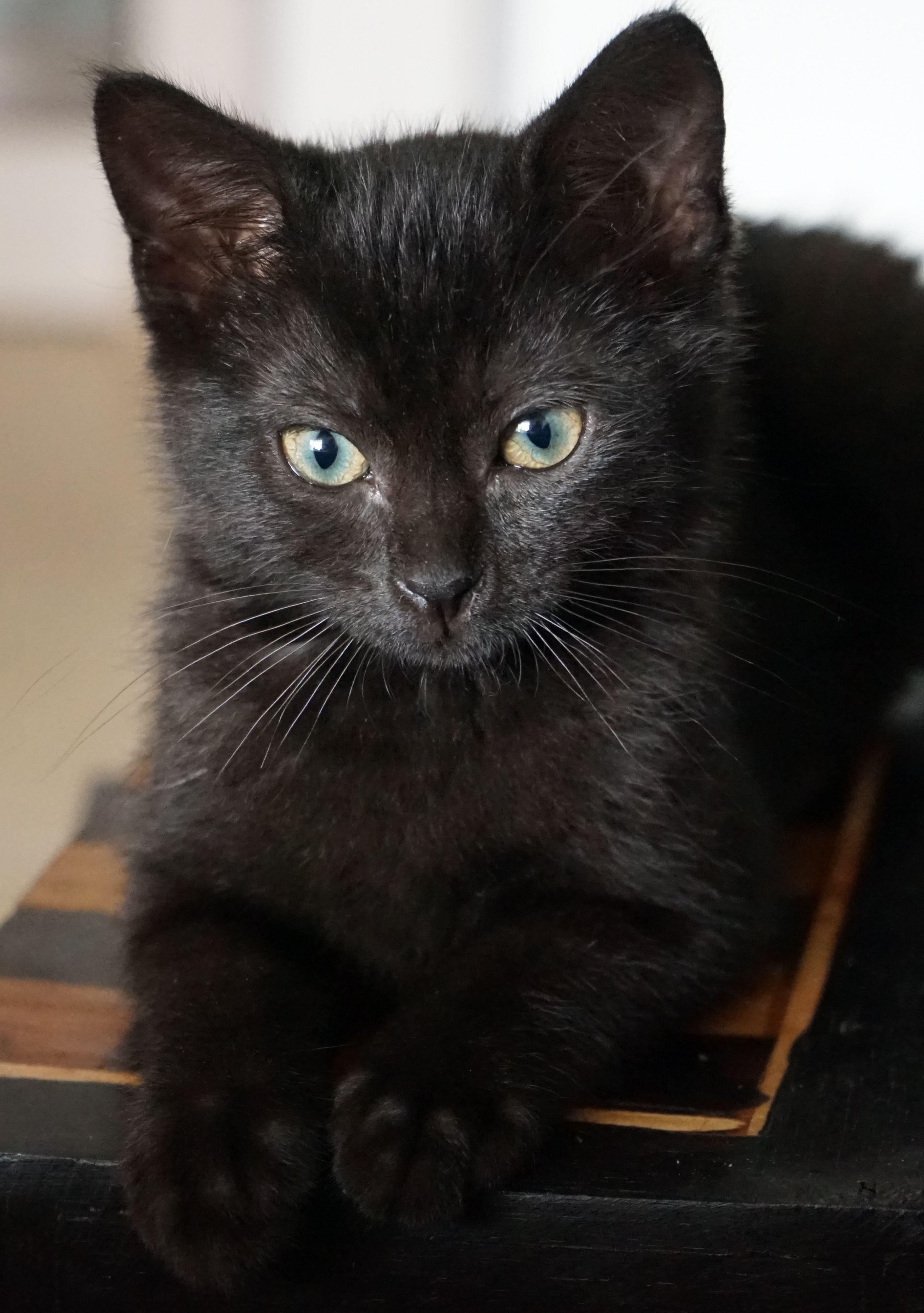 20 Best Black Cat Names Male And Female Black Kitten Names