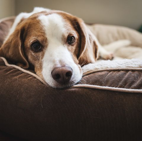 the one room your dog should not be left alone in, according to a new study