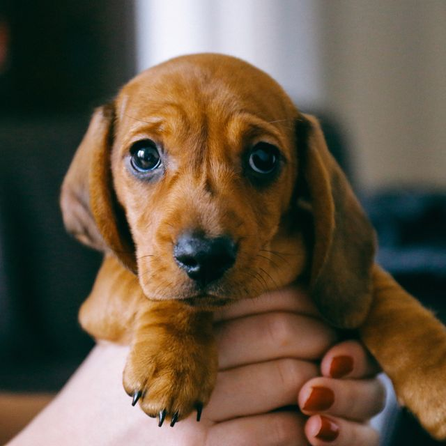 how to know if you've panic bought a puppy and 5 things to do if you no longer want it