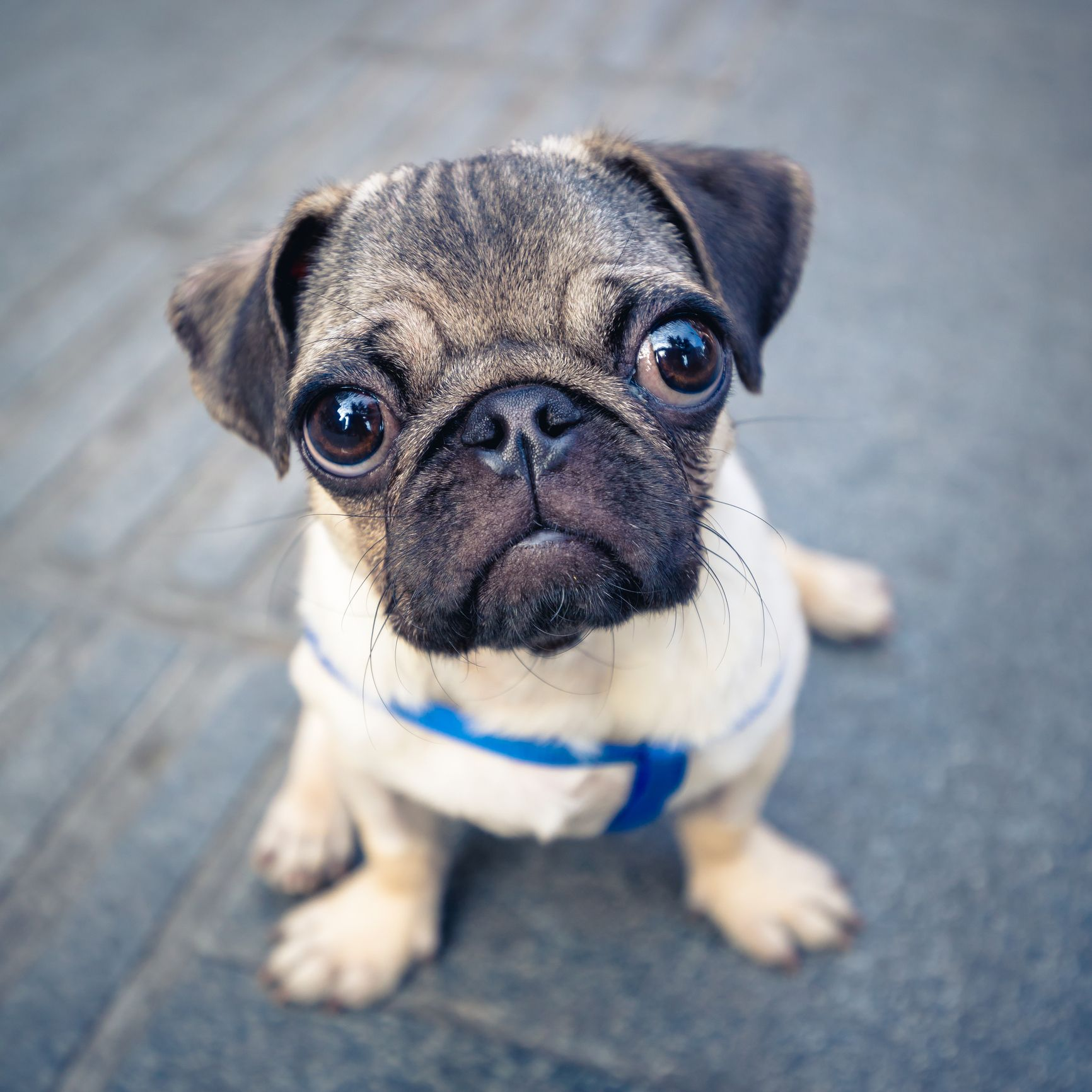 25 Cutest Puppies Of All Time These Photos Will Make You