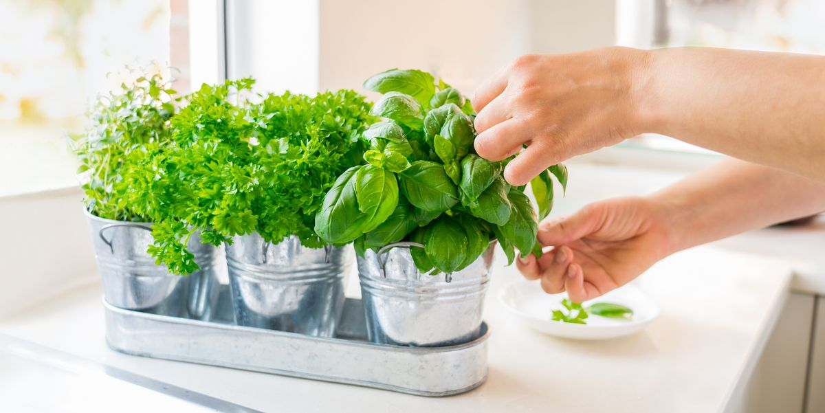 15 Best Indoor Herb Garden Kits to Brighten up Your Kitchen and Boost Your Meals