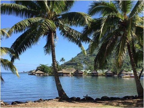Tree, Tropics, Nature, Palm tree, Arecales, Attalea speciosa, Sky, Caribbean, Woody plant, Plant,