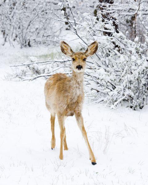 paint by numbers deer