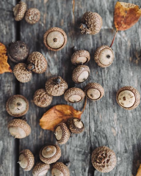 paint by numbers acorns