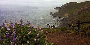 Coastal Trail in Marin Headlands