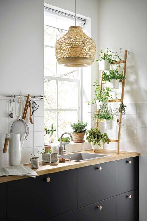 plantas de interior en la cocina hierbas aromáticas