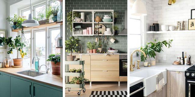 ideas para cocinas con plantas