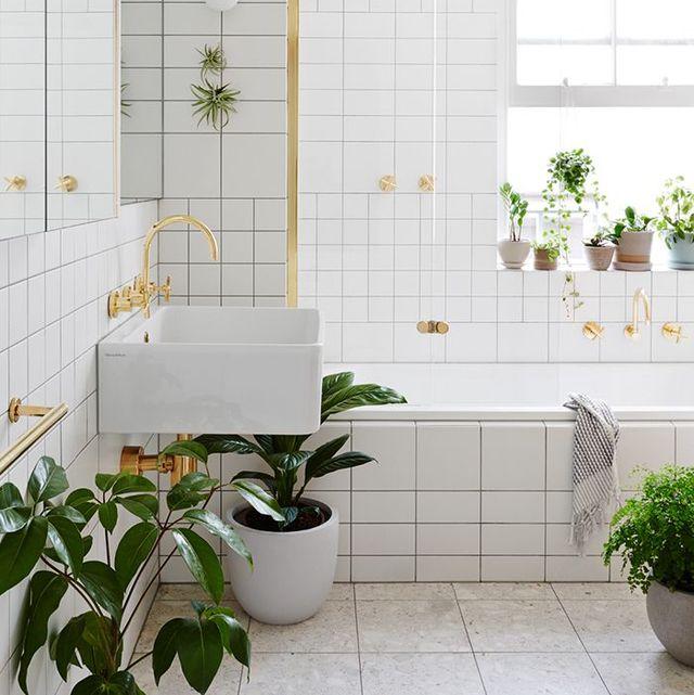 mejores plantas baño