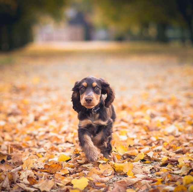 8 unexpected autumn hazards your dog needs you to know