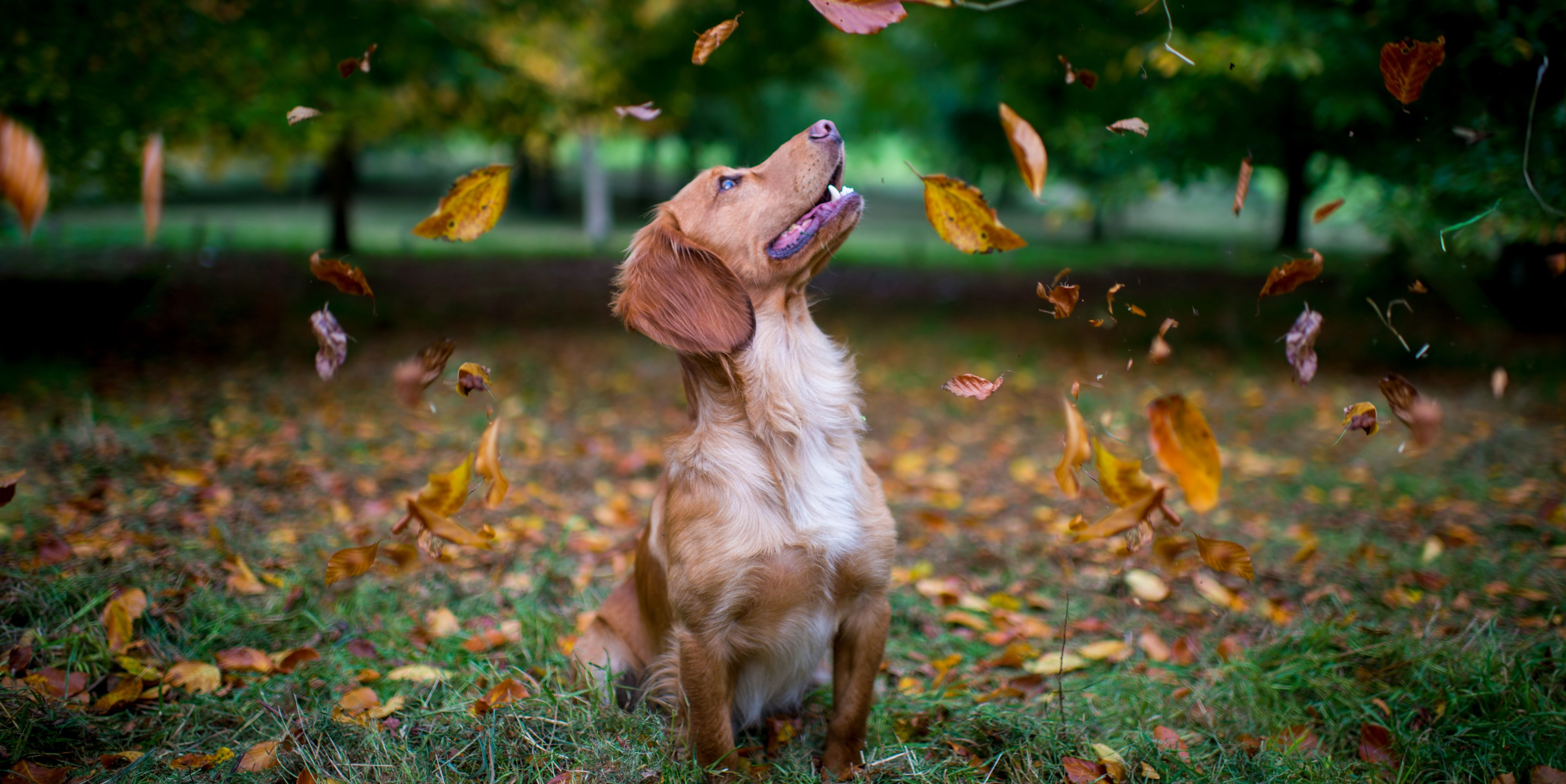 Why dogs should never eat conkers – and the urgent steps to take if they do