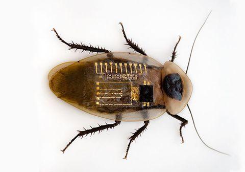 Insect, Invertebrate, Pest, Cockroach, Arthropod, Beetle, house fly, Ground beetle, Oriental cockroach, Scarabs,