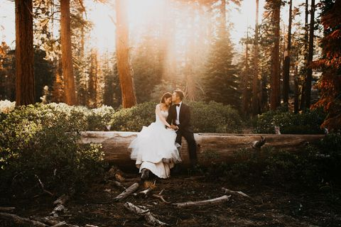 People in nature, Photograph, Bride, Dress, Natural environment, Forest, Woodland, Natural landscape, Tree, Wedding dress,