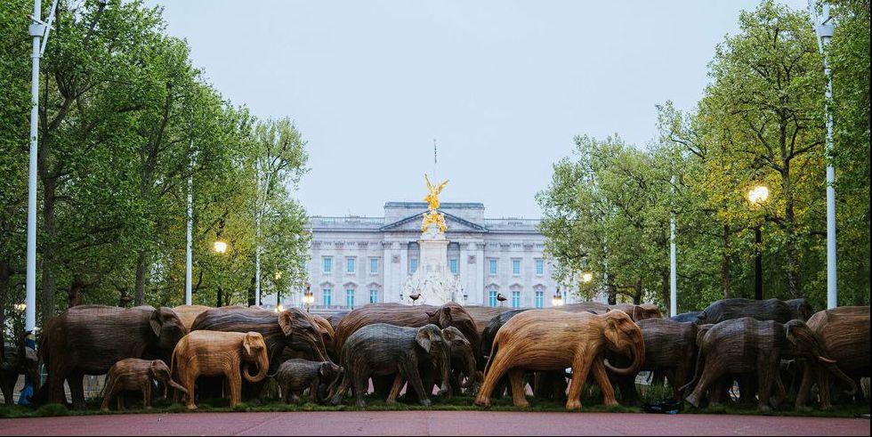 Stunning Art Installation Sees a Herd of Elephants Cross The Mall Outside Buckingham Palace