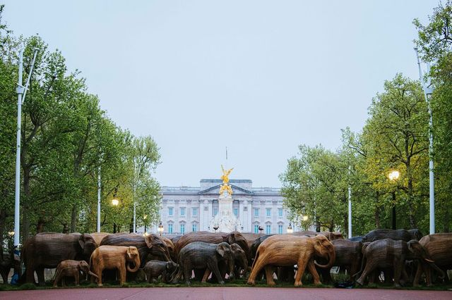 coexistence campaign buckingham palace