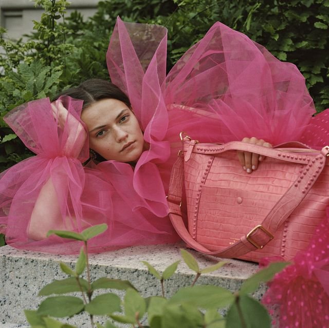 Pink, Flower, Ribbon, Petal, Plant, Present, Rose,