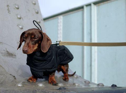 colección de ropa para perros de zara